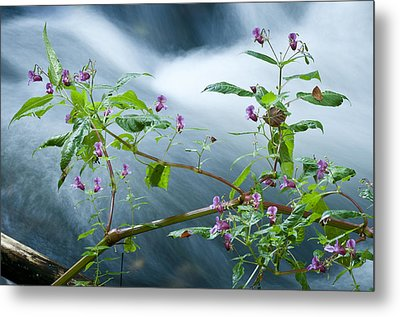 Waterscapes - Lilac Blossom Metal Print by Andy-Kim Moeller