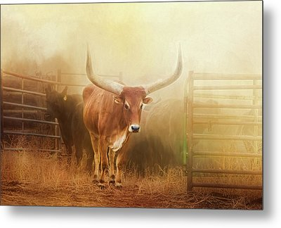 Watusi In The Dust And Golden Light Metal Print