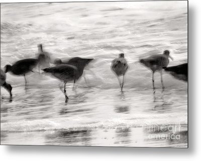 Plundering Plover Series In Black And White 3 Metal Print by Angela Rath