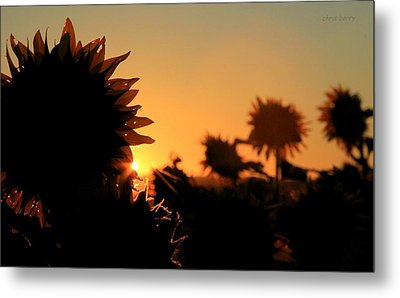 Metal Print featuring the photograph We Are Sunflowers by Chris Berry