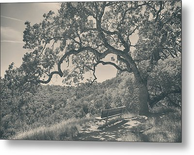 Weary Metal Print by Laurie Search