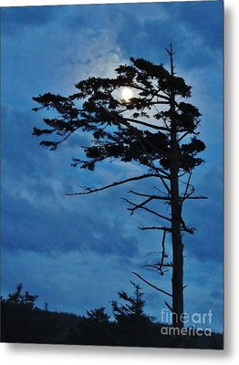 Weathered Moon Tree Metal Print