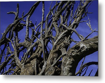 Weathered Tree Roots Metal Print by Garry Gay