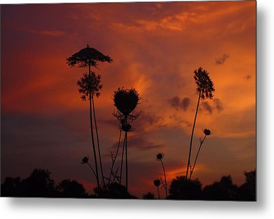 Weeds In The Sunrise Metal Print by Kathryn Meyer