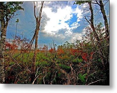 Weeks Bay Swamp Metal Print by Michael Thomas