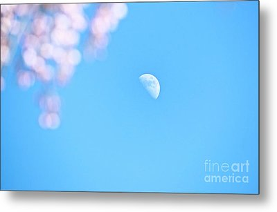 Weeping Cherry And Half Moon Metal Print by Charline Xia