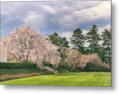 Metal Print featuring the photograph Weeping Cherry In Bloom by Jessica Jenney
