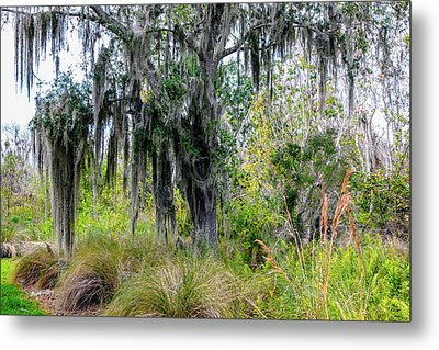 Metal Print featuring the photograph Weeping Willow by Madeline Ellis