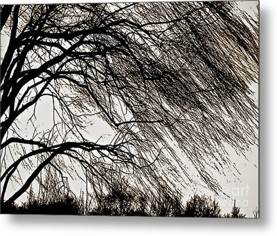 Weeping Willow Tree  Metal Print by Carol F Austin