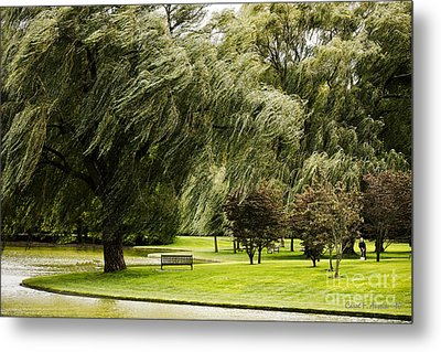 Weeping Willow Trees On Windy Day Metal Print by Carol F Austin