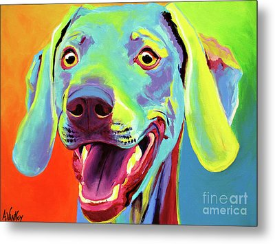 Weimaraner - Taffy Metal Print by Alicia VanNoy Call
