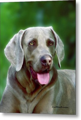 Weimaraner Art My Space Metal Print