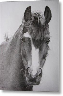 Welsh Pony Metal Print by Karen Wood