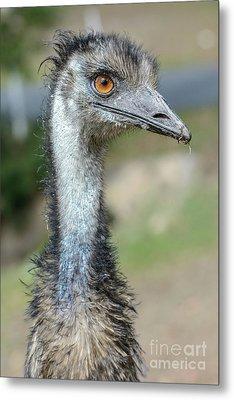 Emu 2 Metal Print by Werner Padarin