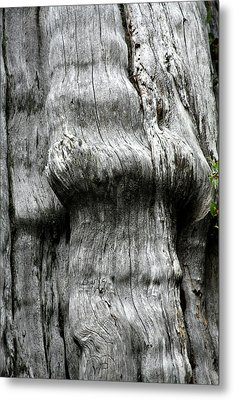 Western Red Cedar - Thuja Plicata - Olympic National Park Wa Metal Print by Christine Till