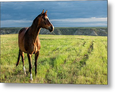 Western Stallion Metal Print by Todd Klassy