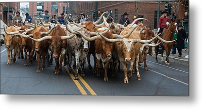 Western Stock Show Metal Print