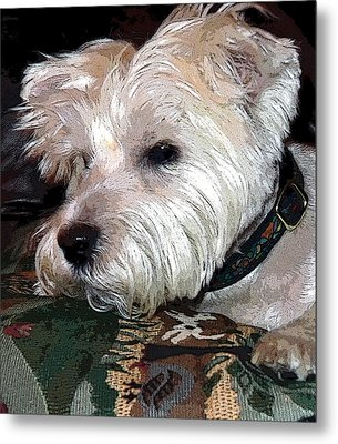 Westie Metal Print by Mindy Newman