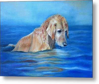 Wet Godden Retriever Metal Print
