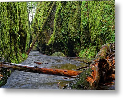 Metal Print featuring the photograph Wet Trail by Jonathan Davison