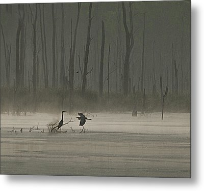 Wetlands Morning Metal Print by Richard Engelbrecht