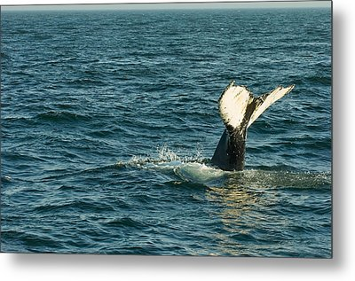Whale Metal Print by Sebastian Musial