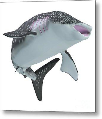 Whale Shark Body Metal Print