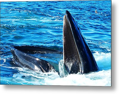 Whale's Opening Mouth Metal Print by Paul Ge