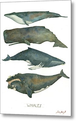 Whales Poster Metal Print