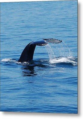 Whales Tale Metal Print by Lisa Kane