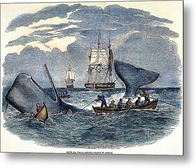 Whaling In South Pacific Metal Print
