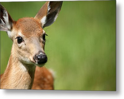 What A Face 1 Metal Print by Karol Livote