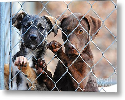 What About Us Metal Print by Jai Johnson