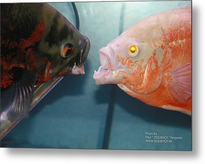 Metal Print featuring the photograph What Did You Say  by Paul SEQUENCE Ferguson             sequence dot net