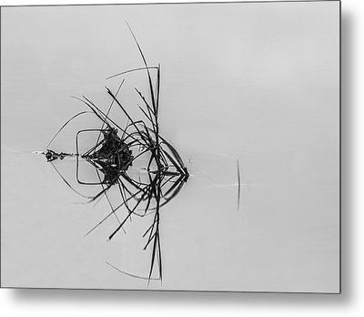 What Do You See Metal Print by Marvin Spates