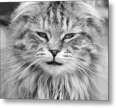 What Mouse Metal Print