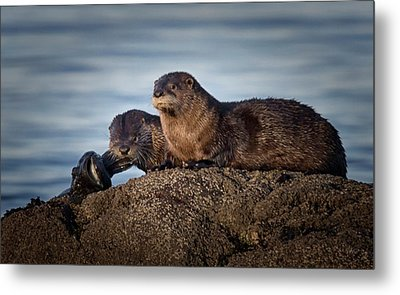 Metal Print featuring the photograph Whats For Dinner by Randy Hall