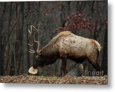 Metal Print featuring the photograph What's This? by Andrea Silies