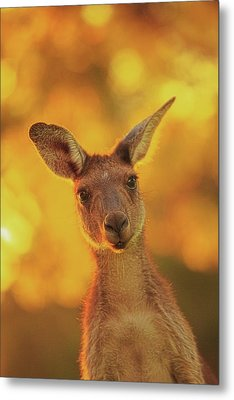 What's Up, Yanchep National Park Metal Print