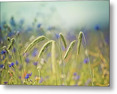 Wheat And Corn Flowers Metal Print by Nailia Schwarz