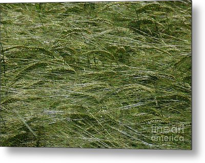Metal Print featuring the photograph Wheat Field by Jean Bernard Roussilhe