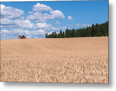 Wheat Fields Metal Print by Sharon Seaward