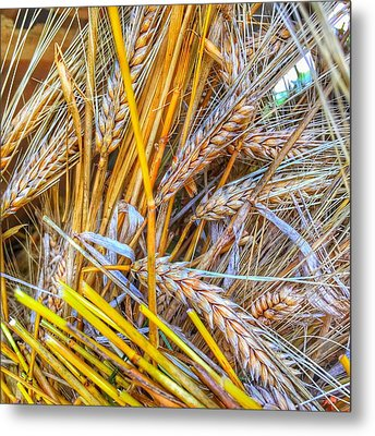 Metal Print featuring the photograph Wheat by Jame Hayes