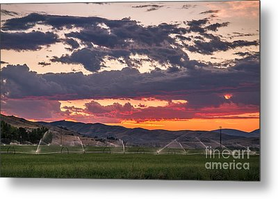 Wheel Line Sunrise Metal Print by Robert Bales