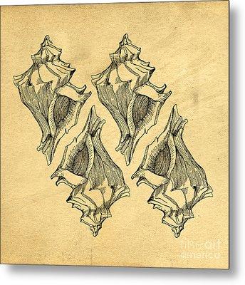 Metal Print featuring the digital art Whelk Seashells Vintage by Edward Fielding