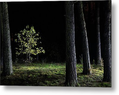 Metal Print featuring the photograph When First Leaves Start To Fall - Autumn by Dirk Ercken