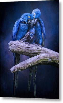 When I'm Feeling Blue Metal Print by Brian Tarr