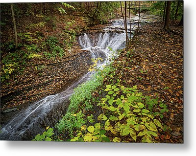 Metal Print featuring the photograph When The Leaves Fall by Dale Kincaid
