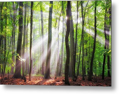 When The Sun Shine On Your Way Metal Print by Janek Sedlar