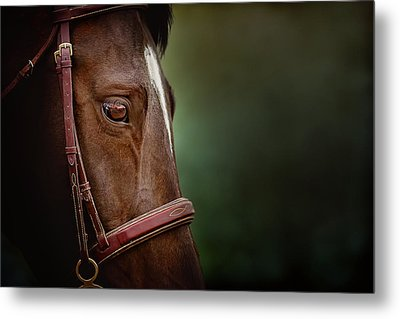 Metal Print featuring the photograph When You Look Into His Eye, What Do You See? by Debby Herold